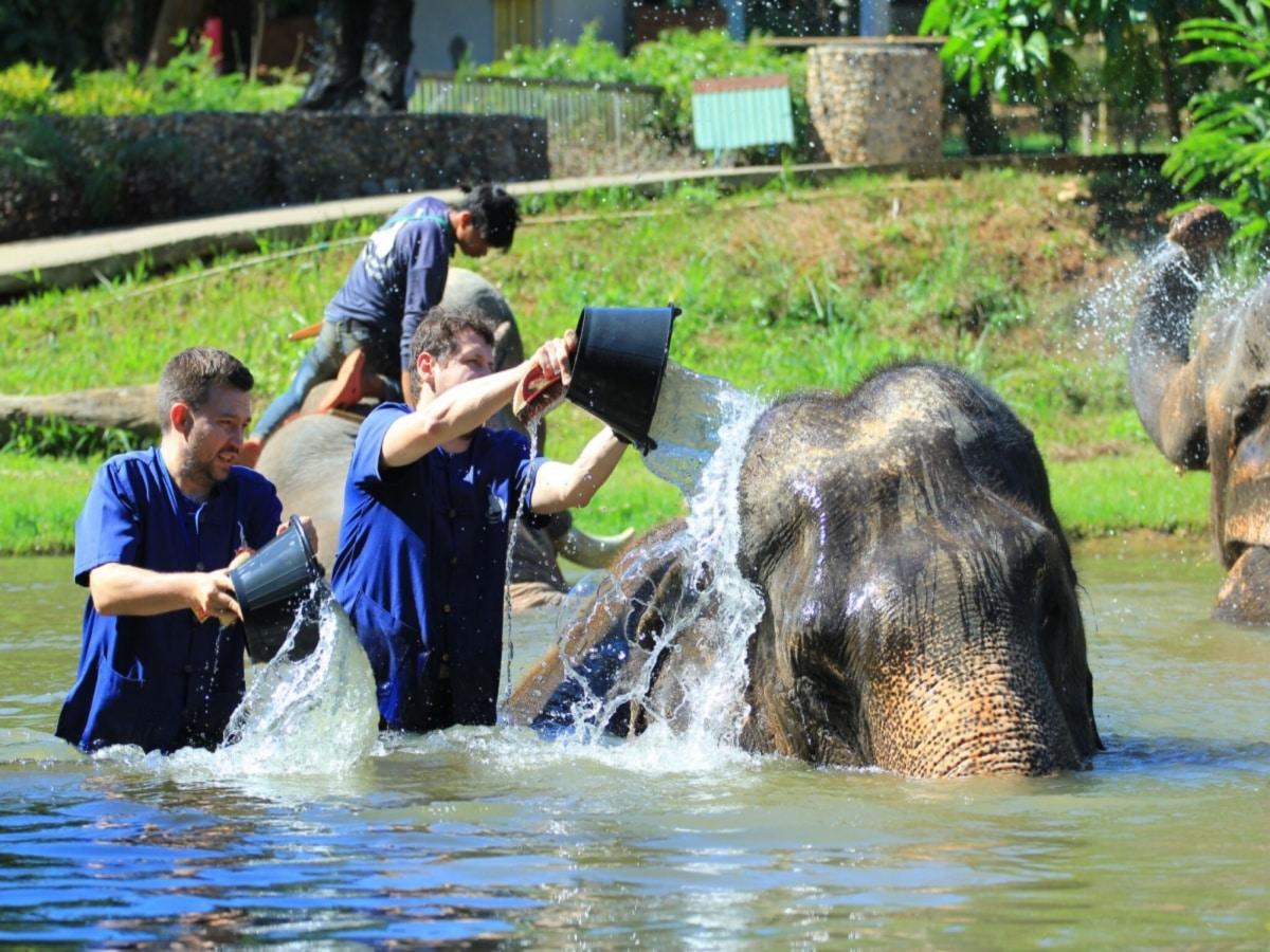 Mycie słoni podczas wyjazdu integracyjnego do Tajlandii.